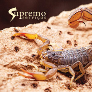 escorpioes_supremo