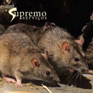ratos_supremo
